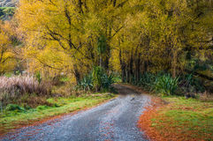 Lake Tutira walk in autumn. Hawke's Bay. New Zealand Royalty Free Stock Photo