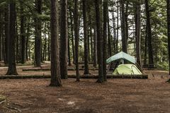 Tent camper Lake of two rivers Campground Algonquin National Park Beautiful natural forest landscape Canada Stock Photos