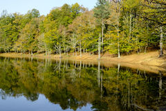 The lake of Umbra Forest in Gargano National Park. Royalty Free Stock Image