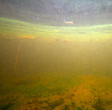 Lake underwater landscape Royalty Free Stock Image