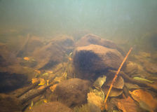 Lake underwater landscape Stock Images