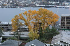 Lake Union,  Autumn, Tree with yellow leaves Royalty Free Stock Image