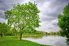Lake at the urban park, Moscow Royalty Free Stock Image