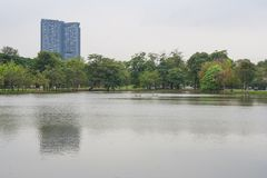 Lake in urban public park with green natural and building in the background. Selective focus Stock Images
