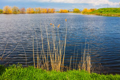 Lake and vegetation Stock Image