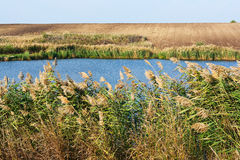 Lake and vegetation Royalty Free Stock Photography