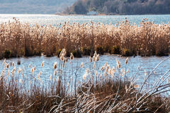 Lake Vico natural reseve Royalty Free Stock Images