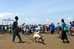 Lake victoria Stock Images