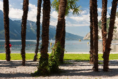 Lake view from behind the palm trees royalty free stock photography