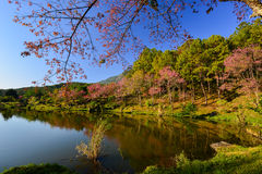 Lake view with bloom pink flower on the mountain. Lake view with bloom pink flower on the mountain background Stock Images
