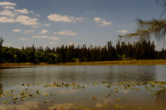Lake view Stock Image