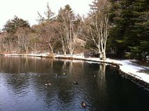 Lake view with ducks at Kumoba Pond in winter royalty free stock images