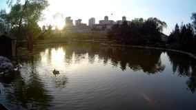 Lake view and ducks stock video footage