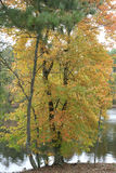 Lake view in a fall setting. Beautiful autumn setting by the river or lake Stock Image