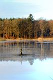Lake View in the Forest Stock Images