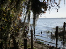 Lake View. In North Florida with trees multicolored Royalty Free Stock Photography
