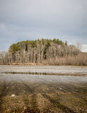 Lake view. Perspective of the lake and tree line Royalty Free Stock Image