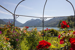 Lake view schliersee through gazebo with roses and clematis Royalty Free Stock Image
