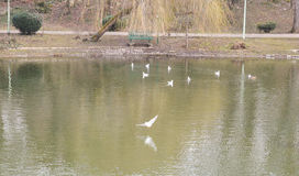 Lake view with seagulls Royalty Free Stock Photos