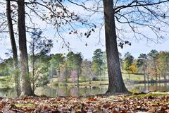 Lake view Trees Royalty Free Stock Photography
