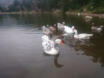 The lake of views Stock Image