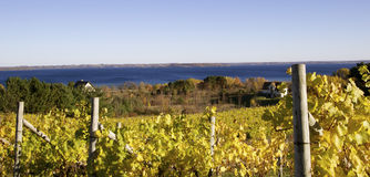 Lake vineyard Stock Photography