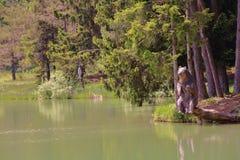 Lake Volčje. A bear goes fishing like a pro Royalty Free Stock Image