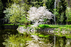 Lake in Vrana Palace at spring time. Vrana Palace ,Sofia .a former royal palace, located on the outskirts of Sofia, the capital of Bulgaria. It is today the royalty free stock photography