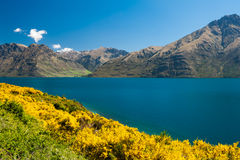 Lake Wakatipu Stock Image