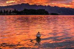 Sunrise at Lake Wakatipu, Queenstown, New Zealand Stock Photo