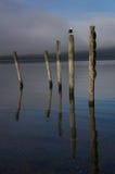 The Wakatipu lake seagull Royalty Free Stock Photography