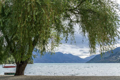 Lake wakatipu view in queenstown. Lake wakatipu view of willow tree from queenstown lakeside beach area. Queenstown is a small town in new zealand. Taken during royalty free stock image