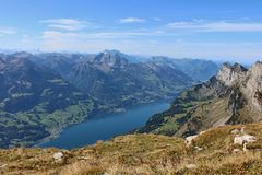 Lake Walensee Fotografering för Bildbyråer