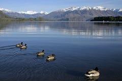 Lake Wanaka. In the early morning stock photos