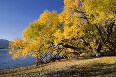 Lake Wanaka, New Zealand stock photography