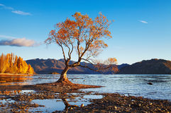Lake Wanaka, New Zealand. Autumn landscape, lake Wanaka, New Zealand Stock Photos