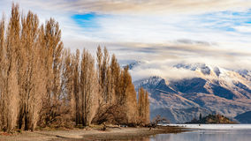 Lake Wanaka, New Zealand. The lonely tree in Lake Pukaki in New Zealand South Island, South alpine Royalty Free Stock Images
