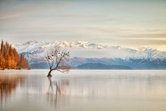 Lake Wanaka Otago New Zealand. Winter at Lake Wanaka, Otago, New Zealand, with birds roosting in the single tree and mist rising from the water stock photo