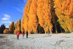 Lake Wanaka,South Island New Zealand. Royalty Free Stock Photo
