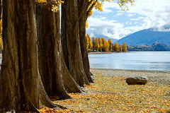 Lake Wanaka Stone Stock Image
