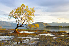 Lake Wanaka Sunrise Stock Photography