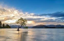 Lake Wanaka on sunset, wanaka tree New Zealand Stock Image