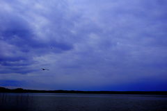 Lake and water bird. The view along the shores of lake before sunset is quiet,and the water bird is flying Stock Image