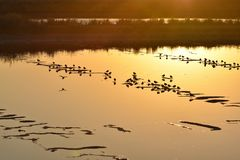 Lake with water birds at sunset Algarve Portugal stock images