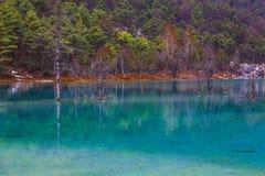 In lake water Royalty Free Stock Image