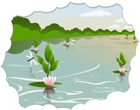 Lake with water lilies Stock Image