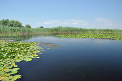 Lake with water lilies in the Danube delta Stock Image