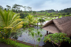 Lake with water lilies and a hut with a thatched roof. Lake with water lilies and a fountain, hut with a thatched roof in the background of the jungle, lush Stock Image