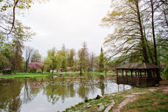 Lake with water lilies in spring park with arbor Royalty Free Stock Photos