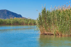Lake water with reed grass cane marsh natural Stock Images